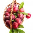 Fresh ripe plum — Stock fotografie