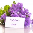 Ageratum — Stock Photo #28243837