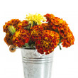 Marigolds — Stock Photo #28333419