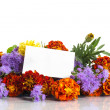 Marigolds — Stock Photo #28333463