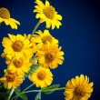 Beautiful yellow flowers — Stock Photo