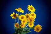 Güzel sarı çiçekler — Stok fotoğraf