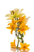 Yellow lily — Stock Photo