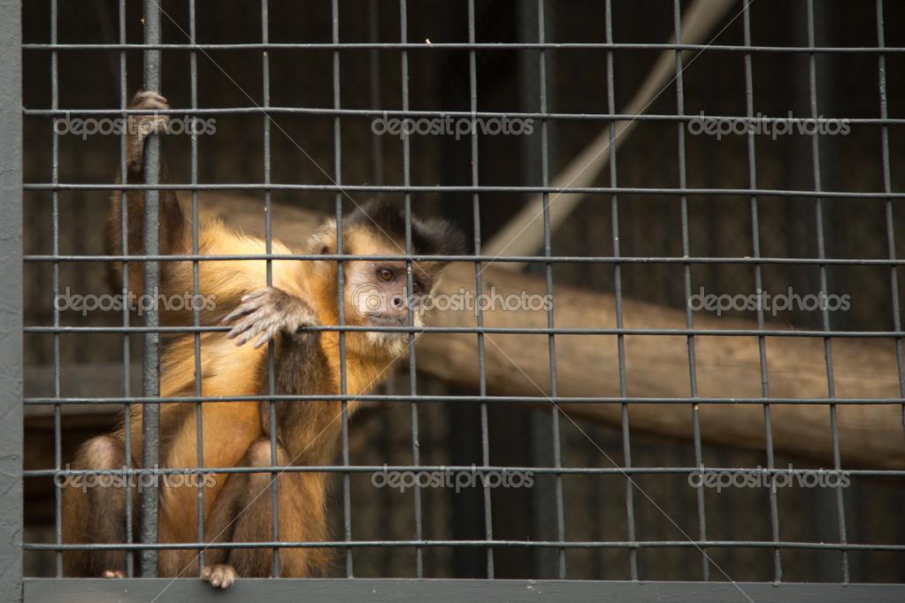 坐在动物园的笼子里的猴子