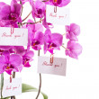 Phalaenopsis — Stock Photo #29738971