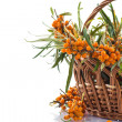 Sea-buckthorn — Stock Photo #29793705