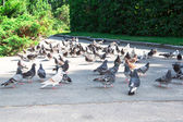 Doves on the street — Stock Photo