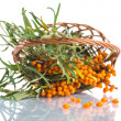 Sea-buckthorn — Stock Photo #30242267