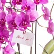 Phalaenopsis — Stock Photo #30269709