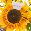 Stock Photo: Bouquet of sunflowers and gratitude
