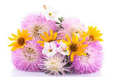 Bouquet of asters — Stock Photo
