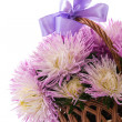 Aster bouquet — Photo