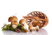 Forest cep — Stock Photo