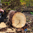 The chainsaw blade cutting the log of wood — 图库照片