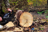 The chainsaw blade cutting the log of wood — Stok fotoğraf