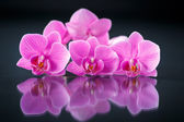 Beautiful branch Phalaenopsis — Stock Photo