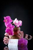Beautiful branch Phalaenopsis with gratitude — Stock Photo