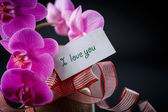 Phalaenopsis line with a declaration of love — Stock Photo