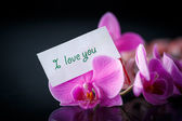 Phalaenopsis line with a declaration of love — Foto Stock