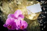 Beautiful branch Phalaenopsis — Foto Stock