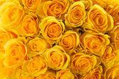 Rosas amarillas — Foto de Stock