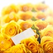 Beautiful yellow rose — Stock Photo #41379295