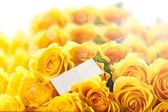 Beautiful yellow rose — Stockfoto