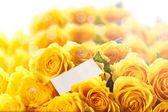 Vacker gul ros — Stockfoto