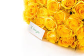 Beautiful yellow rose — Stock Photo
