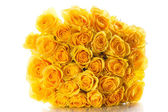 Yellow roses isolated on white background — Foto de Stock