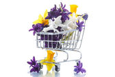 Spring flowers hyacinth in the truck  — Stock Photo