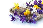 Hyacinth and daffodils — Stock Photo