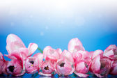 Beautiful bouquet of spring tulips — Stock Photo