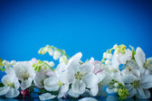 Spring bouquet of lily of the valley and apple blossom  — Stock Photo
