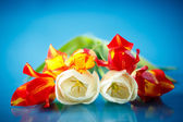 Bouquet of spring tulips — Stock Photo