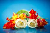 Kytice tulipánů jara — Stock fotografie