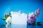 Beautiful spring lilac — Stockfoto