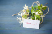 White clematis flowers gratefully — Stock Photo