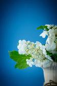 Viburnum flowers fruit — Zdjęcie stockowe