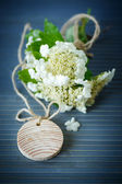 Viburnum flowers fruit — Stockfoto