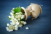 Viburnum flowers fruit — Stok fotoğraf