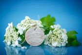 Viburnum flowers fruit — Stock Photo