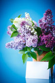 Beautiful spring lilac — 图库照片