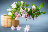 Weigel beautiful pink flowers — Stock Photo