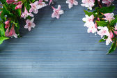 Weigel beautiful pink flowers — Stockfoto