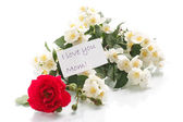 Bouquet of roses and jasmine — Stock Photo