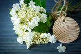 Viburnum flowers fruit — Foto Stock