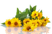 Bouquet of yellow daisies with a snail — Stock Photo
