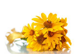 Bunch of yellow daisy flowers — Stock Photo