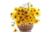 Daisy bouquet — Stockfoto